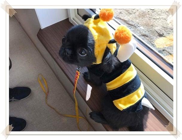 杏ダイニングでミツバチ