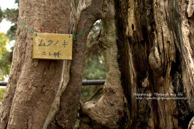 sakura_at西公園_6