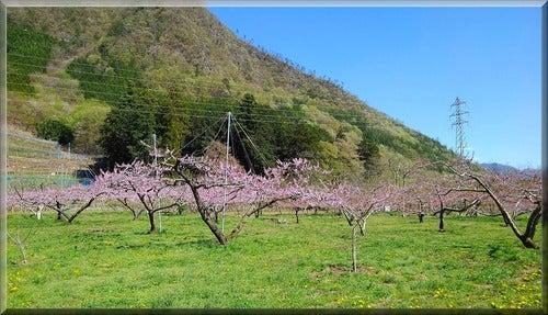 三峯神社 帰り道 山 空 梅 自然 浄化 癒し パワー