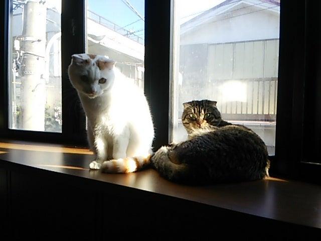 ねこ道楽 | 練馬区 | 猫カフェな...
