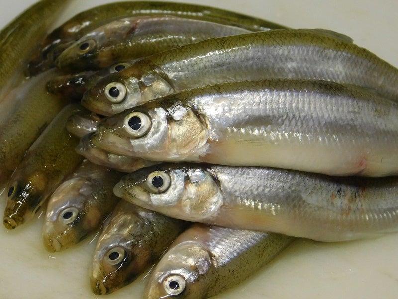 公魚2942