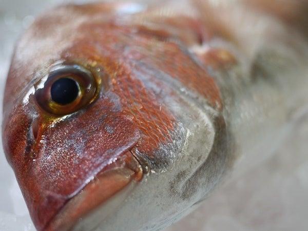 鯛の子2945