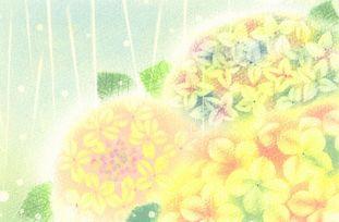 紫陽花☆かおりんアート