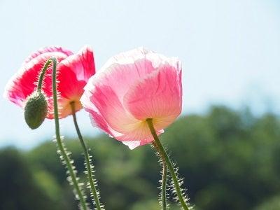 くりはま花の国②
