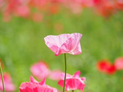 くりはま花の国⑤