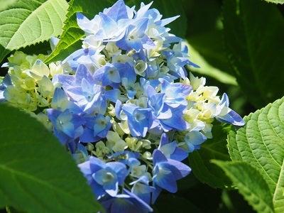 くりはま花の国⑨