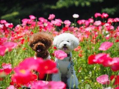 くりはま花の国④
