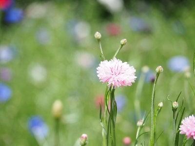 くりはま花の国⑩