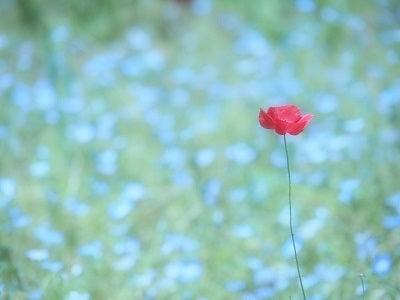 くりはま花の国⑥
