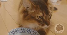猫が語る、ハッピーキャットダイエットニーレを食べてみた話