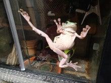 蛙のカンフー