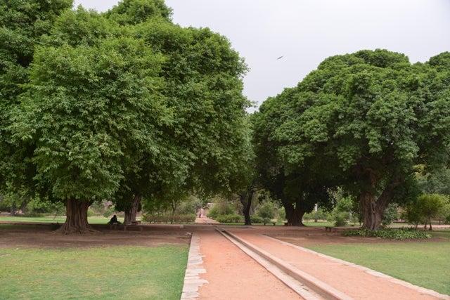 Delhi19