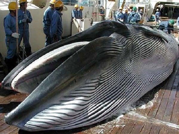 鰯鯨290801