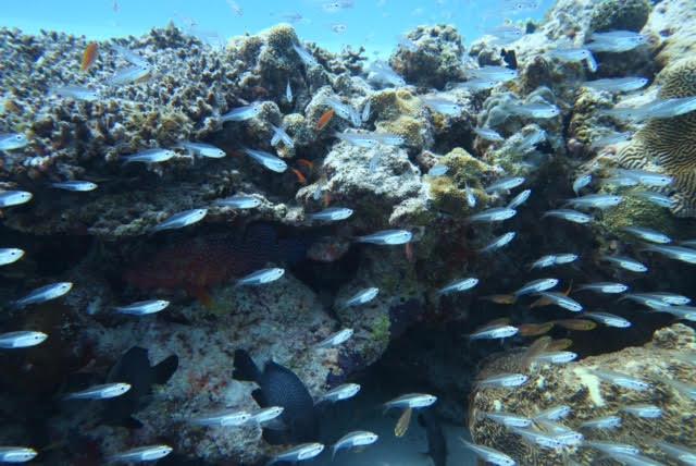 沖縄ダイビング15