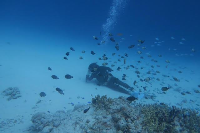 沖縄ダイビング17