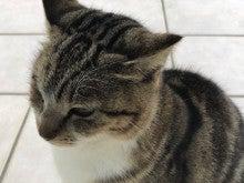 南国猫.jpg