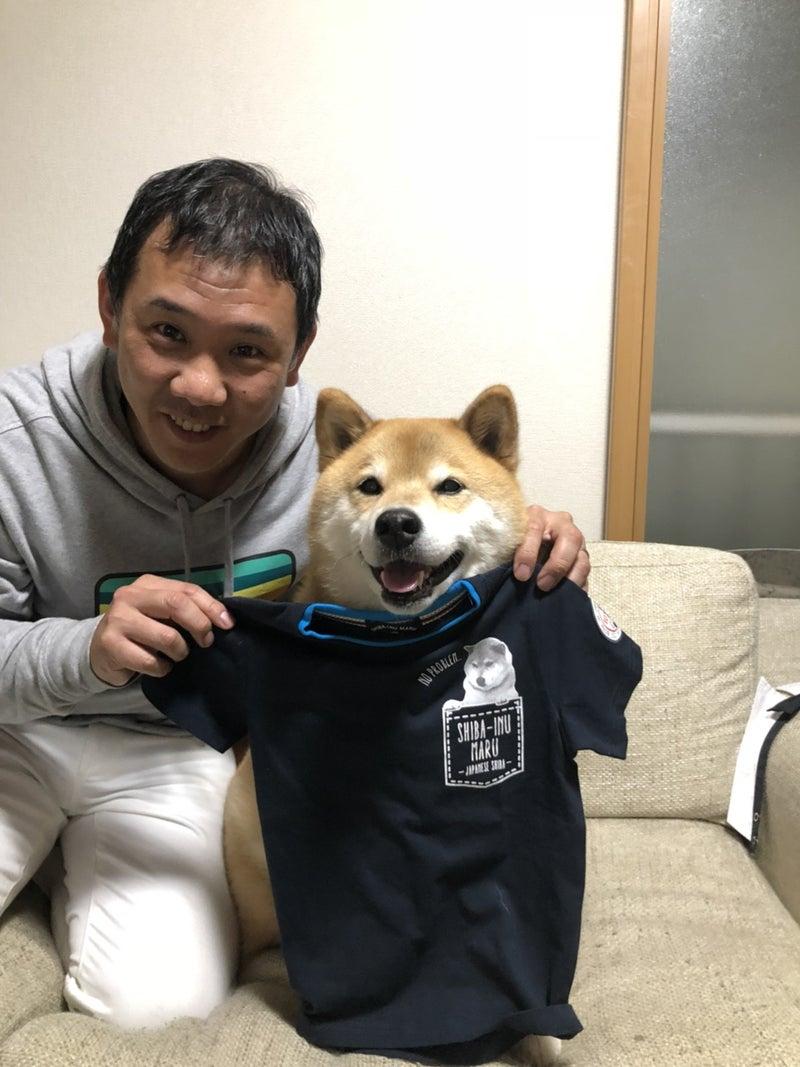 柴犬まる tシャツ
