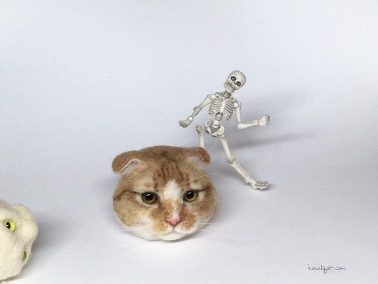 猫 グラスアイ