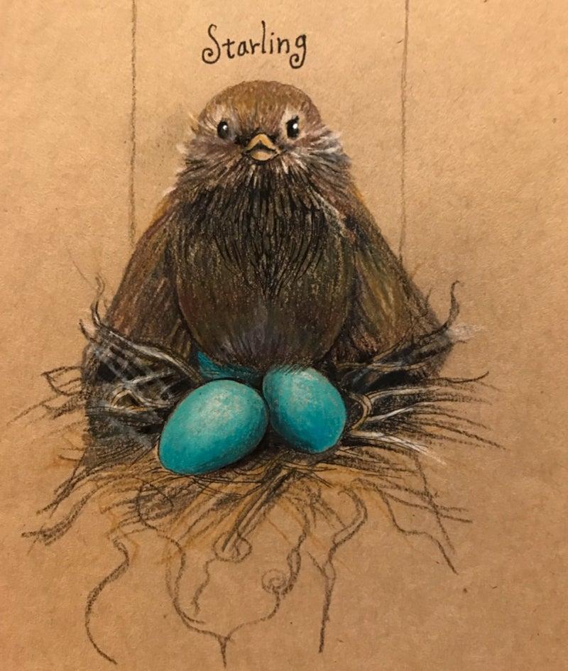 ムクドリ 卵