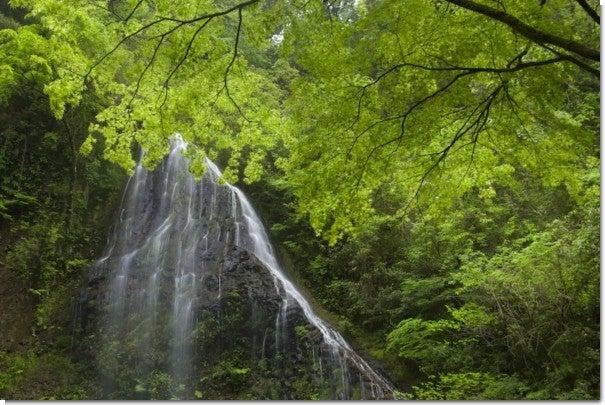 うなぎ滝1