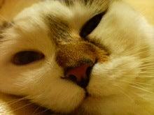 猫に仁義 怪獣に小判-090125_2059~01.jpg