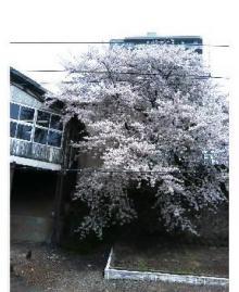 P506iC0014614845.jpg