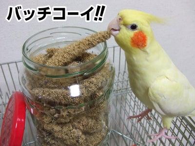 たんぽぽ042607