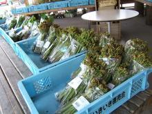 にしかわ道の駅の山菜売場