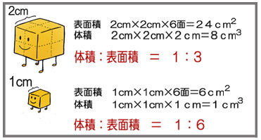 体積と表面積の比率