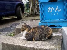 (オー)ミィちゃん-49