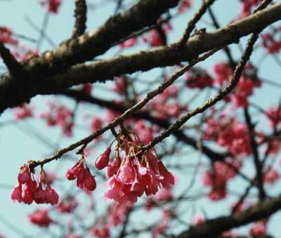 2008年3月30日 日曜日 お花見バーベキュー