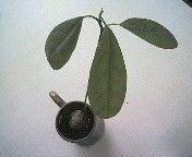 abokun