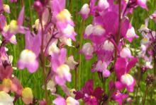 花ほたる116.JPG