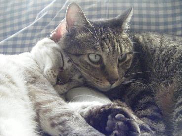 概ね、猫です。-yoami14