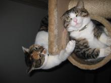 ネコに学ぶ21世紀を生き抜く法-ジョリとテム