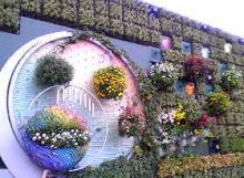 バイオラング花