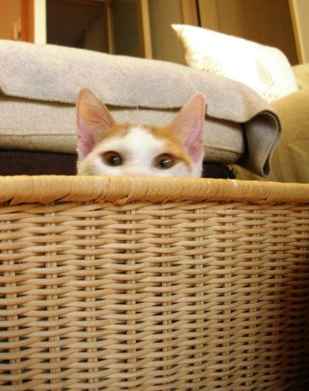 ずれずれブログ…湘南で猫と暮らせば…-去年の今日のクッキー