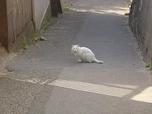 宮城県の猫さん-3