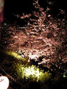 2008.3sakura1