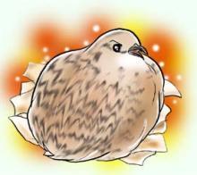 茉花様、抱卵中。
