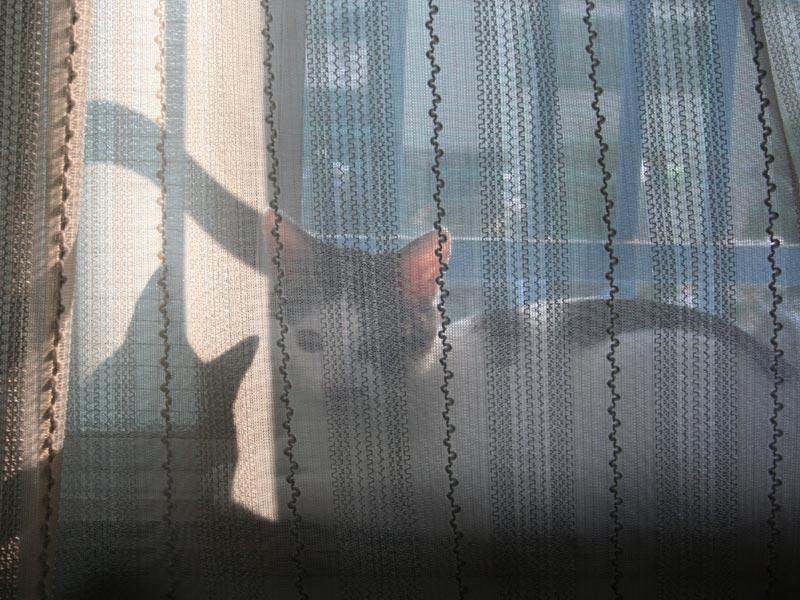 窓辺のキャラ