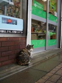 (オー)ミィちゃん-82