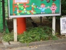 '05夏・仙台の猫-1