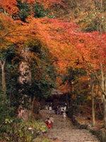 百済寺石段