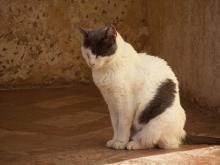 アルハンブラの猫