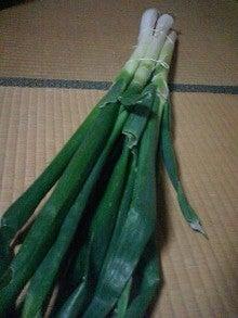 yukari diary-MA320178-0001.JPG