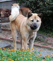 針金犬02