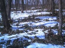 雪解けの散歩道