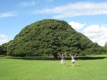 福岡市南区若久・美容室「Link hair」-この木なんの木