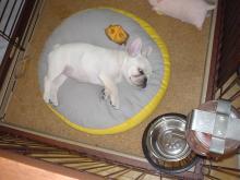 グリコ寝る3